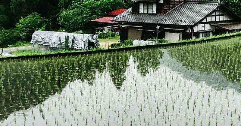 Measuring radiation contamination in Fukushima
