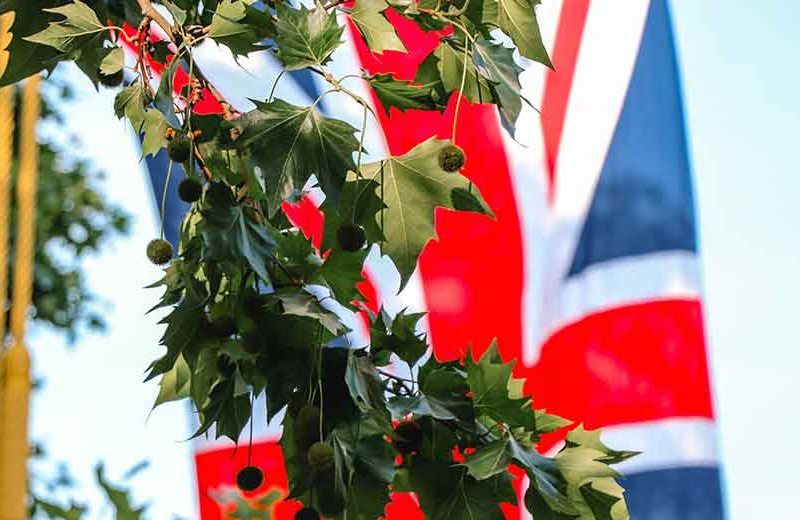 Union flag and treee